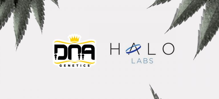 DNA Genetics, DNA Oregon, Halo, Cannabis, Marijuana, Flower, DNA Genetics flower Halo