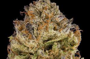DNA Genetics 24k Gold Cannabis Flower Profile