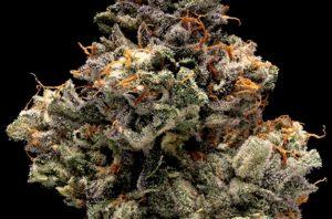 DNA Genetics Bakers Delight Cannabis Flower
