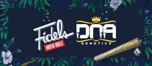 Fidels x DNA Genetics Hash Hole